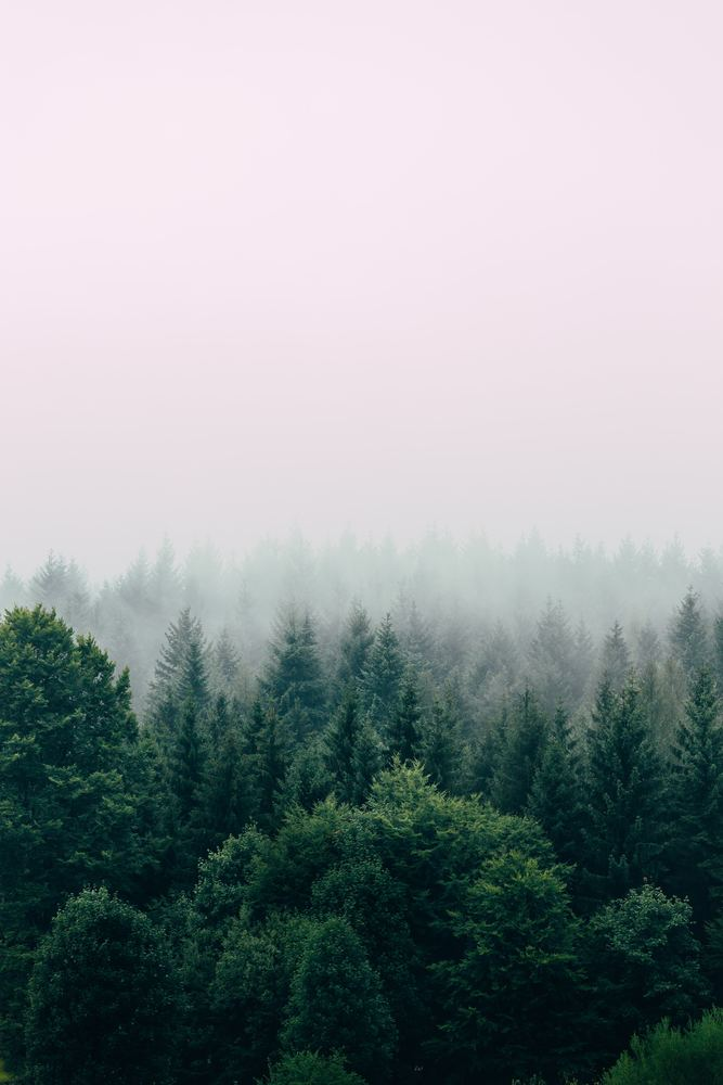 Skogens analoga belöning